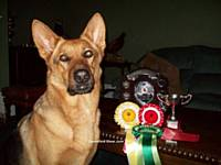 Simba's Obedience Awards from Danesford show
