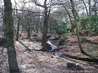 Lords Wood