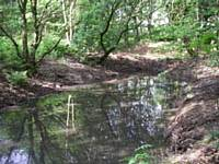 New pond in Oakenbank Wood