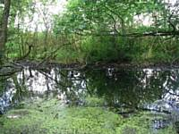 Top Pond in Glade Wood