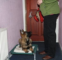 Kato on his camp bed by the front door - Puppy Diary: Raising a working dog 2014