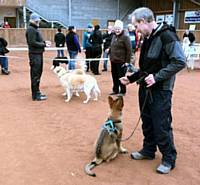 Kato mixing with dogs at a show - Puppy Diary: Raising a working dog 2014