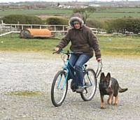 Kato is learning to trot at the side of a bike - Puppy Diary: Raising a working dog 2014