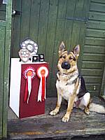 Pepper GMP brood bitch winning CD, UD and joint first WD not yet 2 years old!