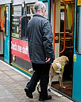 A guide dog and owner boards a Bury bound tram at Withy Grove.  Photo courtesy GMPTE
