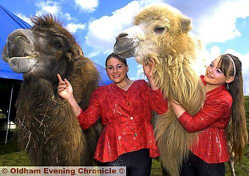 Kashmir and Sabia the camels with Madalane Timmis, left, and Cinzia Timmis