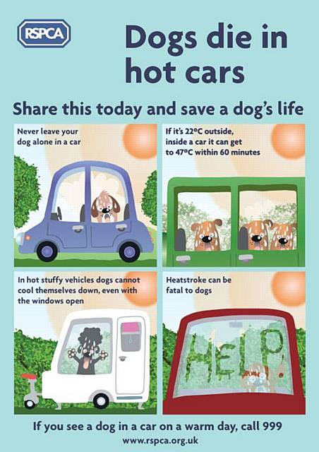Remember dogs die in hot cars. If it's 22 degrees outside it can reach 47 degrees inside your vehicle