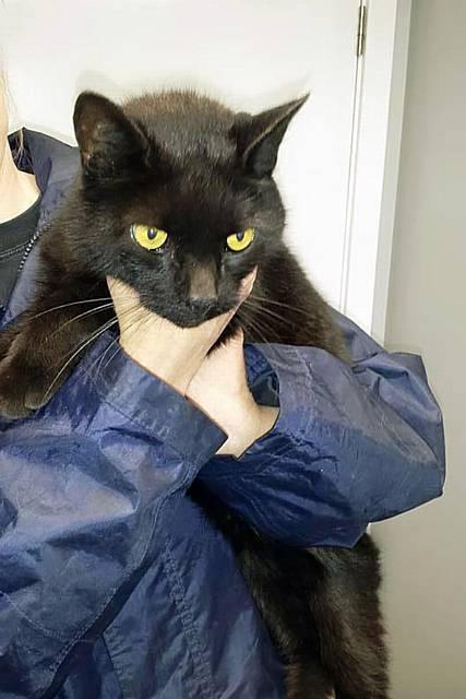 Free Video Cat Years Cat Dexter