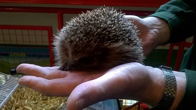 Hedgehog Rescue Rochdale at Hollingworth Lake Visitors Centre