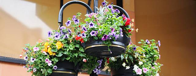 Floral displays blossoming across the borough during the summer
