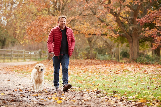 Dogs can catch parvovirus whilst out on a walk (stock image)