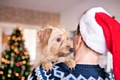 Pet-proof your home this Christmas to avoid an unnecessary emergency trip to the vet