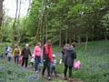 Ealees Forest School bluebells Dig n Delve session in May 2017