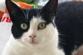 Bluebell Cat Rescue and Rehoming - Betty