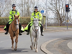GMP Mounted Unit is on the hunt for horses for the unit