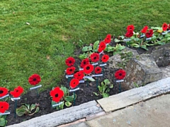 The knitted poppies at the Norden Cenotaph