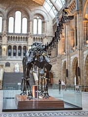 Dippy arrives in Rochdale next month
