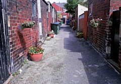 REAG recently adopted a back alley for planting flowers on Cecil Street