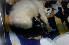 This stray cat gave birth to five kittens in a rabbit hutch