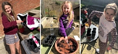Charlotte Garcka, Summer Hoyle and Annabel Crooks all planting their sunflowers