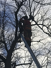 Firefighters used a 10 metre ladder which just reached the man and he was able to make his way down to safety - the cat fell from the branch he was on, landed on one below and was then able to jump down to safety